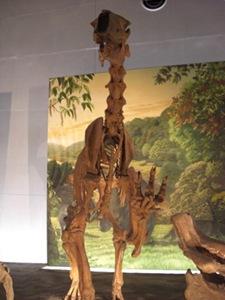 Hi-five from a sloth! চলুন একবার ঘুরে আসি ডাইনোসর এর যুগ থেকে